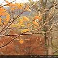 Nov 9 十和田湖 (184)_調整大小.JPG