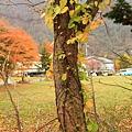 Nov 9 十和田湖 (128)_調整大小.JPG