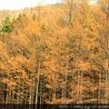 Nov 9 十和田湖 (18)_調整大小.JPG
