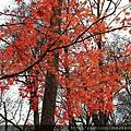 Nov 9 奧入瀨溪 (70)_調整大小.JPG