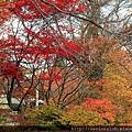 2011 Nov 10  姬之湯 (35)_調整大小.JPG