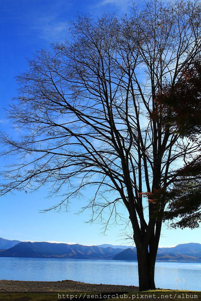 2011 Nov 11 田澤湖 (49)_調整大小.JPG