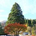 2011 Nov 11 田澤湖 (58)_調整大小.JPG