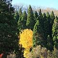 2011 Nov 11 田澤湖 (66)_調整大小.JPG