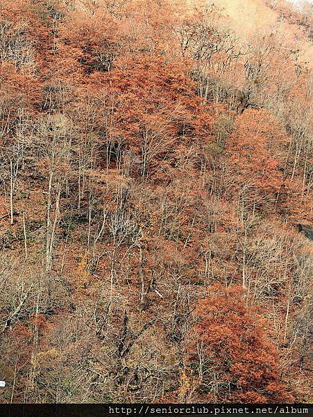 2011 Nov 10 玉川水壩 (108)_調整大小.jpg