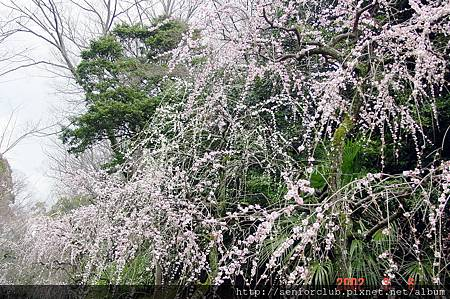 京都梅園  (5)