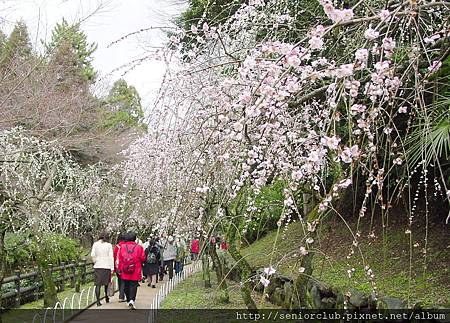 京都梅園  (6)