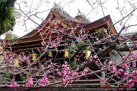 京都梅園  (7)