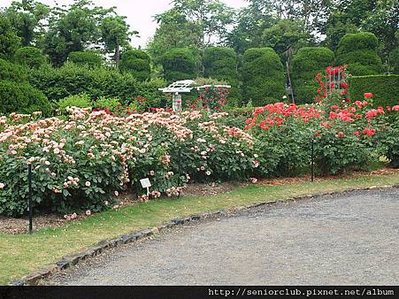 2010 京都植物園 玫瑰 (11)_調整大小