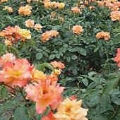 2012 京都植物園_07_調整大小