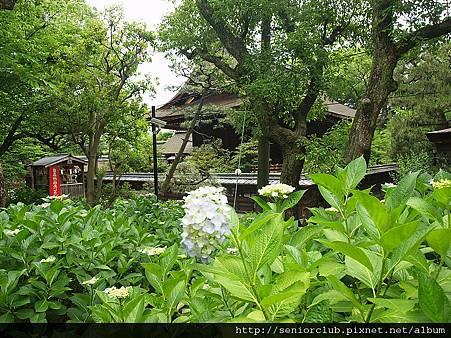 2010 京都藤森神社 (0077)_調整大小