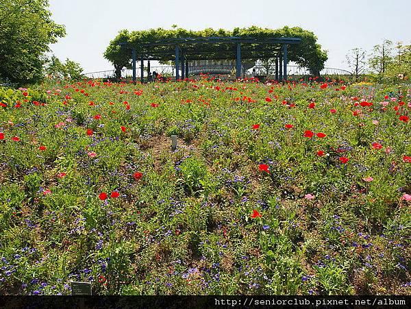 2010 比叡山山頂花園 (018)_調整大小