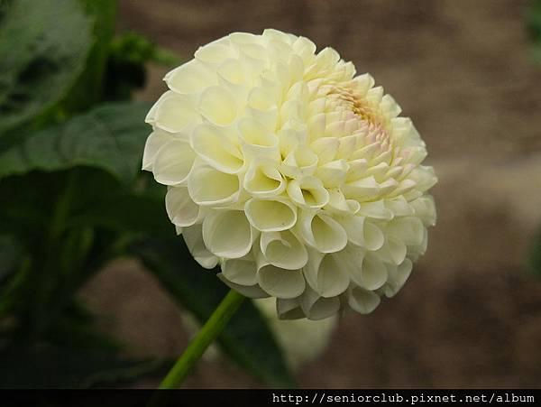 2012 USA SF Garden (106)_調整大小