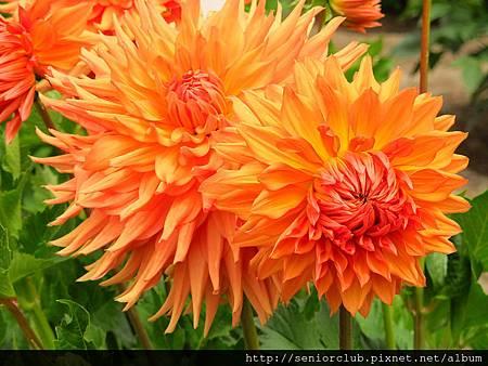 2012 USA SF Garden (50)_調整大小