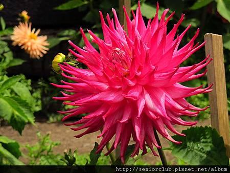 2012 USA SF Garden (173)_調整大小