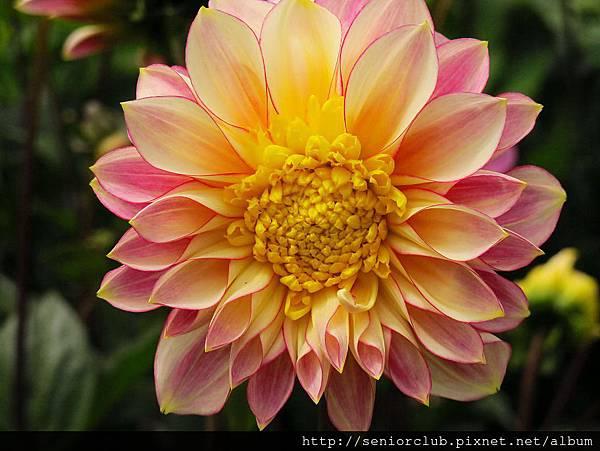 2012 USA SF Garden (121)_調整大小