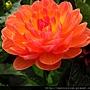 2012 USA SF Garden (143)_調整大小
