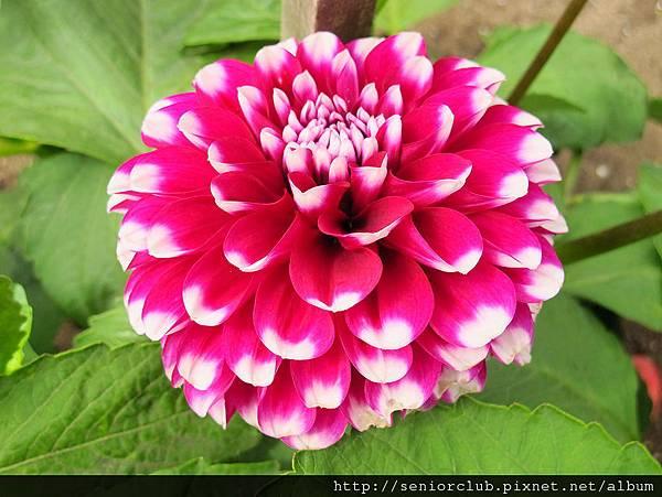 2012 USA SF Garden (97)_調整大小