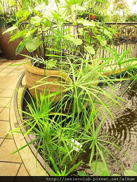 2012 USA SF Garden (257)_調整大小