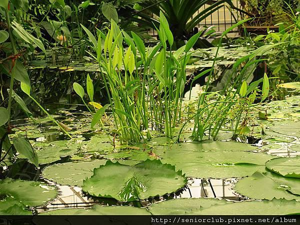 2012 USA SF Garden (291)_調整大小