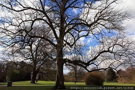 2013 April Kew Garden tree (2)_調整大小