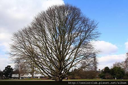 2013 April Kew Garden tree (23)_調整大小