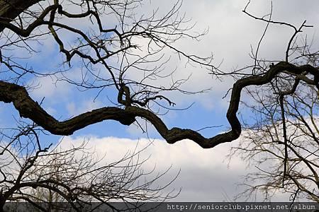 2013 April Kew Garden tree (38)_調整大小