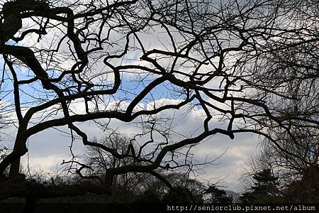 2013 April Kew Garden tree (43)_調整大小