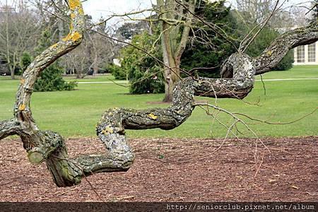 2013 April Kew Garden tree (48)_調整大小