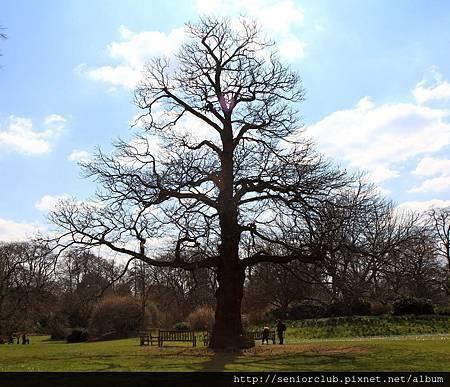 2013 April Kew Garden tree (59)_調整大小