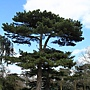 2013 April Kew Garden tree (73)_調整大小