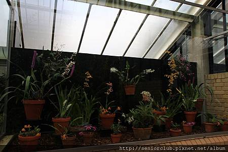2013 April Kew Garden Princess of wales Conservatory (6)_調整大小