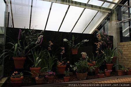 2013 April Kew Garden Princess of wales Conservatory (6)_調整大小