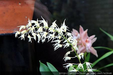 2013 April Kew Garden Princess of wales Conservatory (8)_調整大小