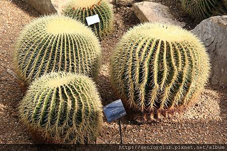 2013 April Kew Garden Princess of wales Conservatory (83)_調整大小