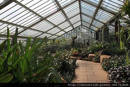 2013 April Kew Garden Princess of wales Conservatory (167)_調整大小