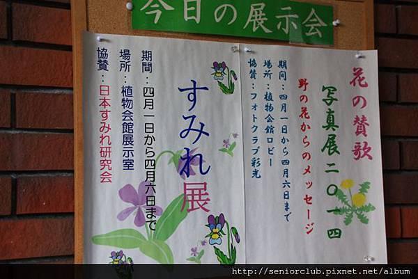 2014 April 5 神代植物園すみれ花展 - 31