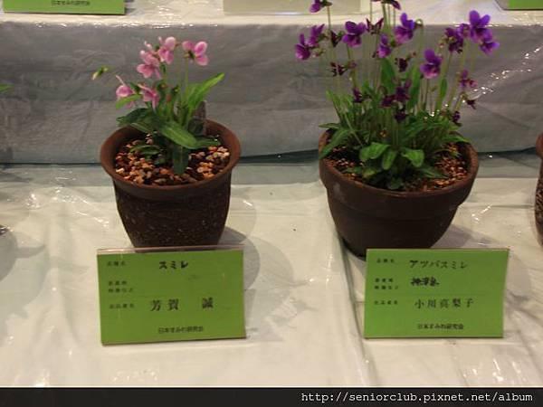 2014 April 5 神代植物園すみれ花展 - 17