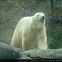 Japan-June-7-Zoo (6)