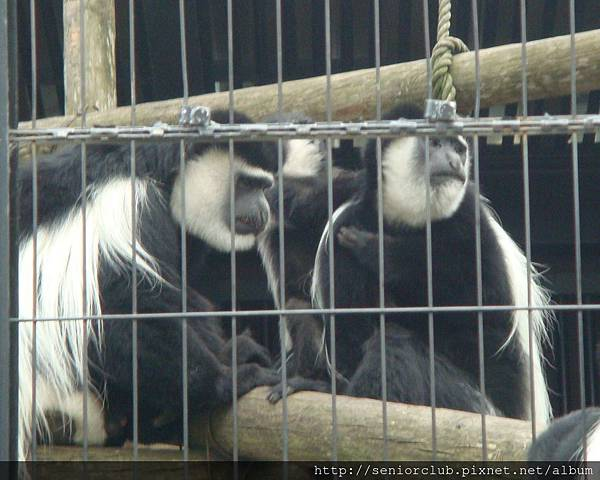 Japan-June-7-Zoo (11)