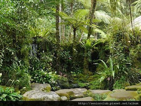 2014 AUG BALI 植物園  (97).jpg