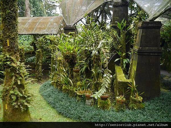 2014 AUG BALI 植物園  (81)