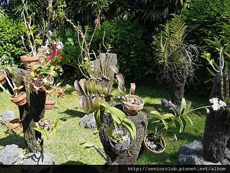 2014 Auguest bali orchid garden (2)