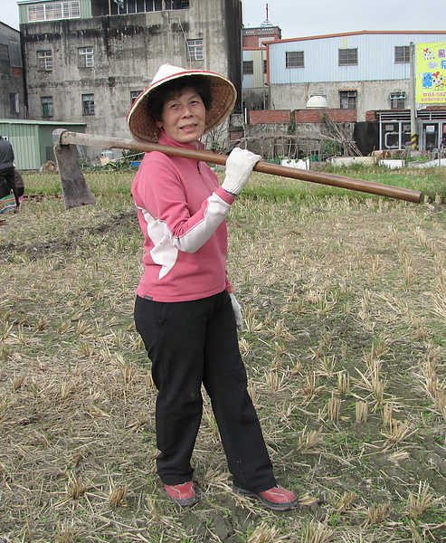 2011 Jan 7 竹東烤番薯 (25).JPG