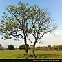 台北大學樹種 (167)_調整大小.JPG