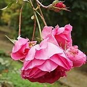 北海道大學_植物園 (2).jpg