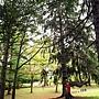 北海道大學_植物園 (18).jpg