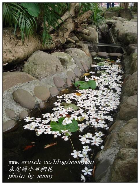 水中的桐花