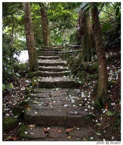 桐花 登山步道