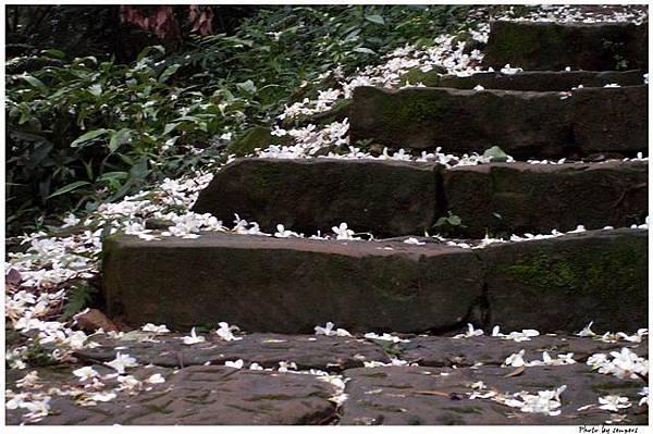 桐花登山步道